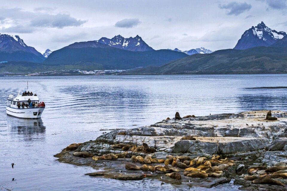Seelöwenkolonie im Beagle-Kanal, Tierra del Fuego NP