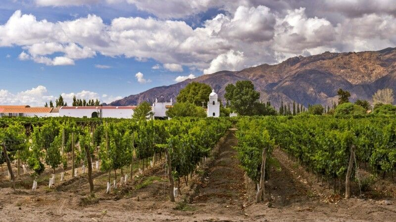 Weingut in Cafayate © Diamir