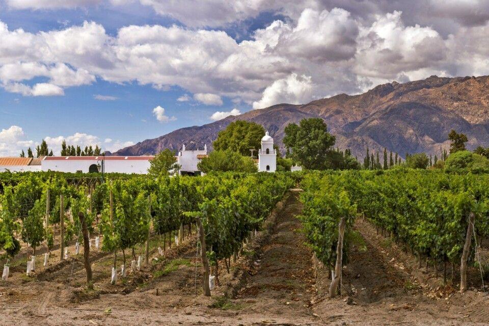 Weingut in Cafayate