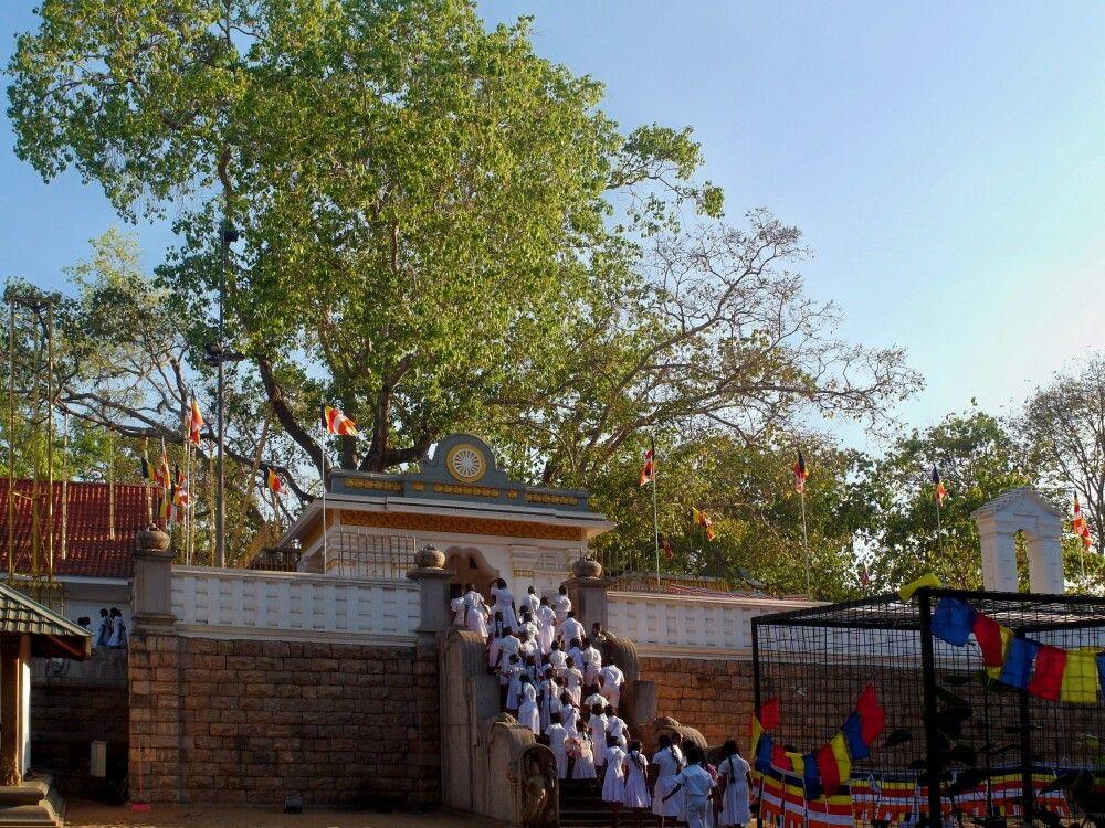 SRI_2016_4UHO_Anuradhapura_Bodhi_Baum.jpg