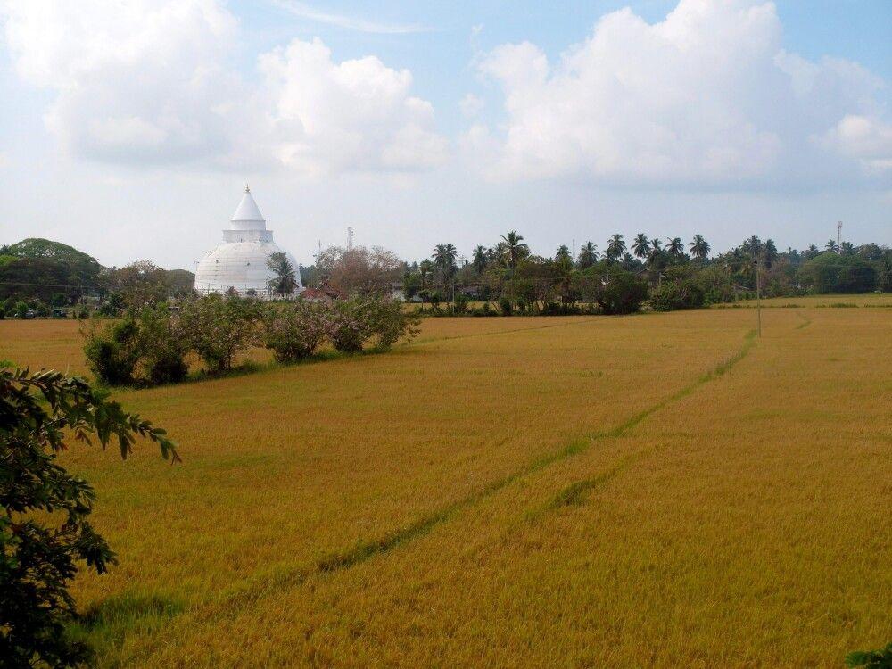 Tissamaharama Raja Maha Vihara buddhistischer Tempel