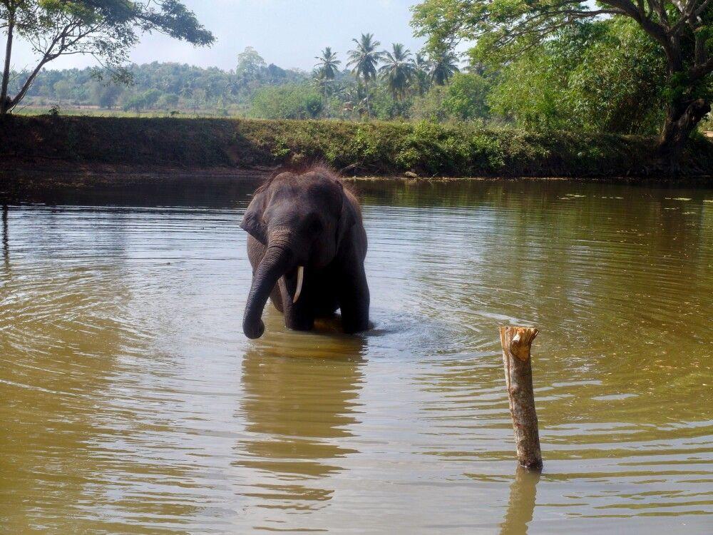 SRI_2016_4UHO_Elephant.jpg