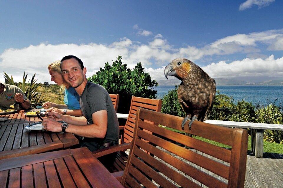 Kapiti Island Neuseeland Kiwi-Spotting