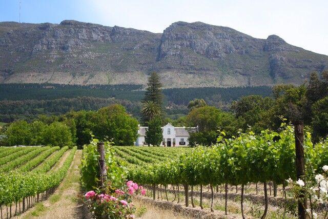 Weinland um Stellenbosch