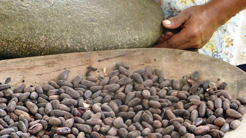 Kakao in Costa Rica © Diamir