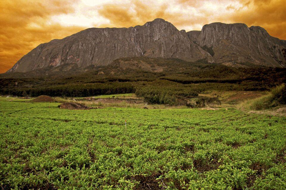Blick auf die Mulanje Berge