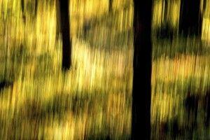 ZEN-ART Fotografie im herbstlichen Finnland