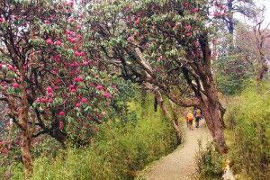 Trekkingweg bei Tadapani