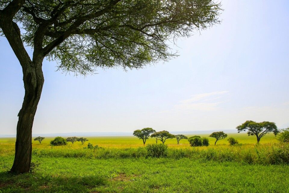 Blick in die Weite der Savanne