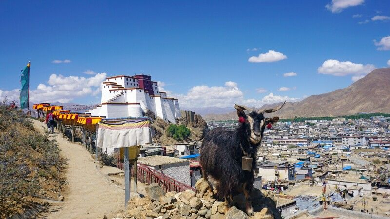 Blick auf Shigatse und seinen Dzong © Diamir