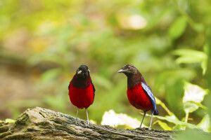 Vogelpirsch auf Borneo