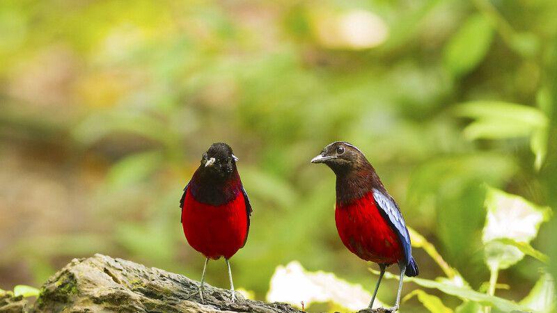 Vogelpirsch auf Borneo © Diamir