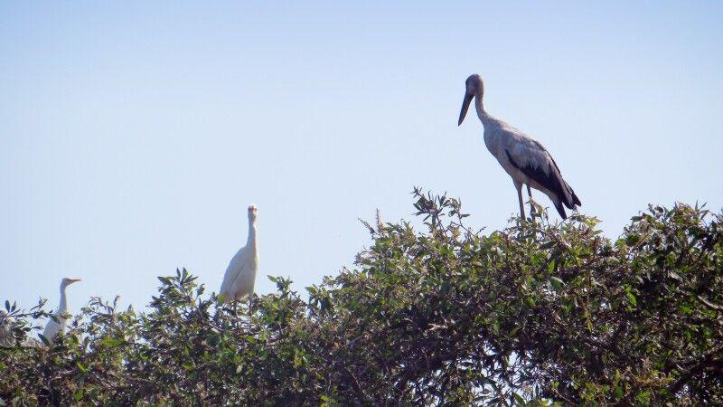 Vogelpark im Mekongdelta © Diamir