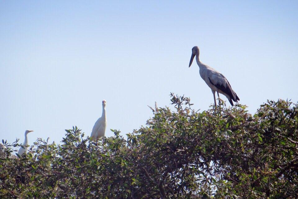 Vogelpark im Mekongdelta