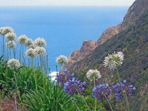 Blumenmeer am Pass Boca do Risco