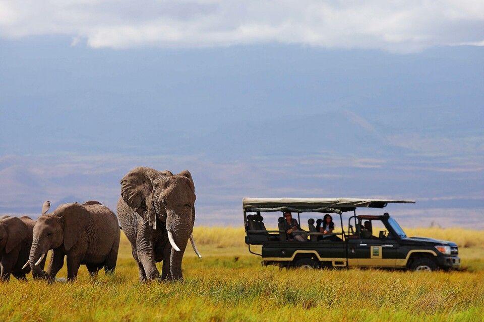 Elefanten bei einer Safari im Amboseli NP