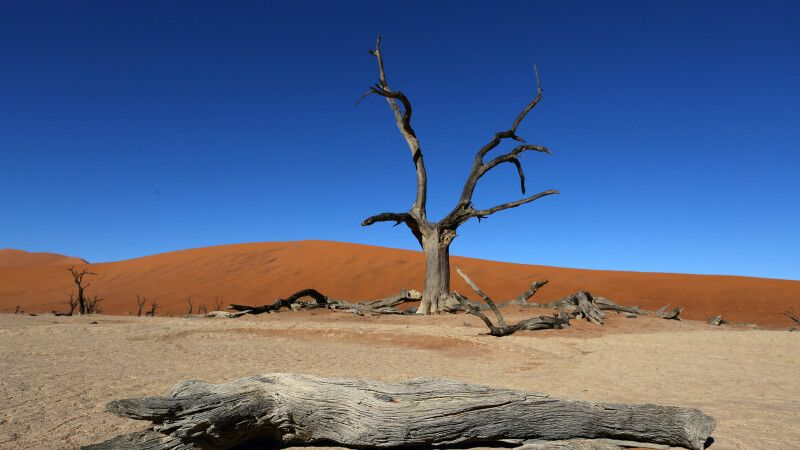 Deadvlei © Diamir