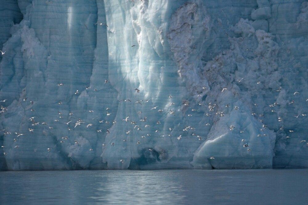Vogelschwarm vor beeindruckender Gletscher-Kulisse