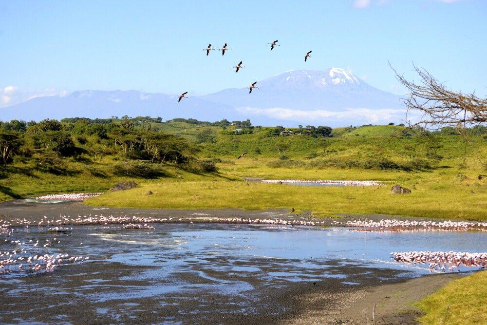 Flamingos im Großen Momella-See vor dem Kilimanjaro