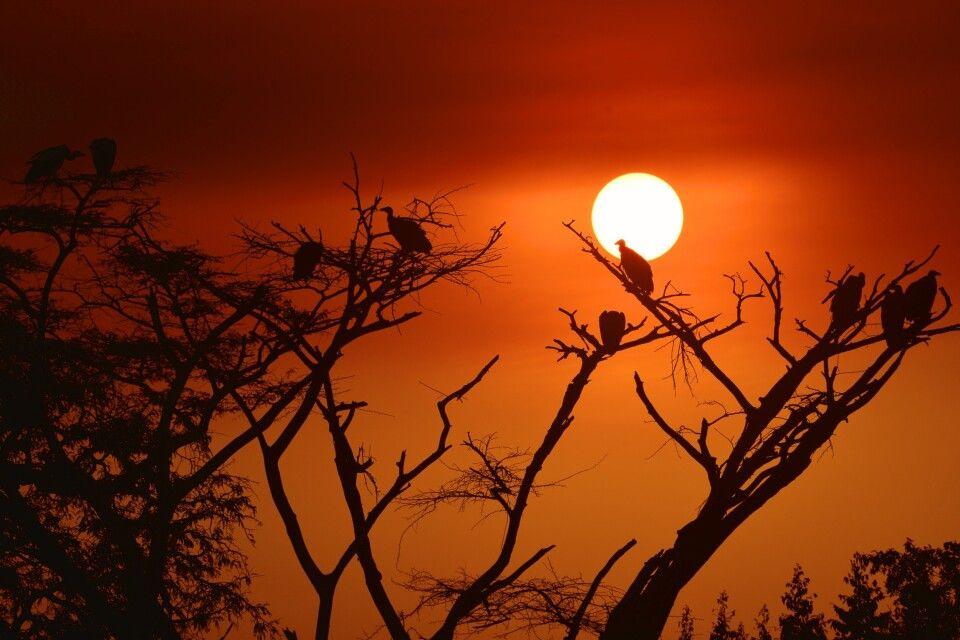 Geier im Sonnenuntergang
