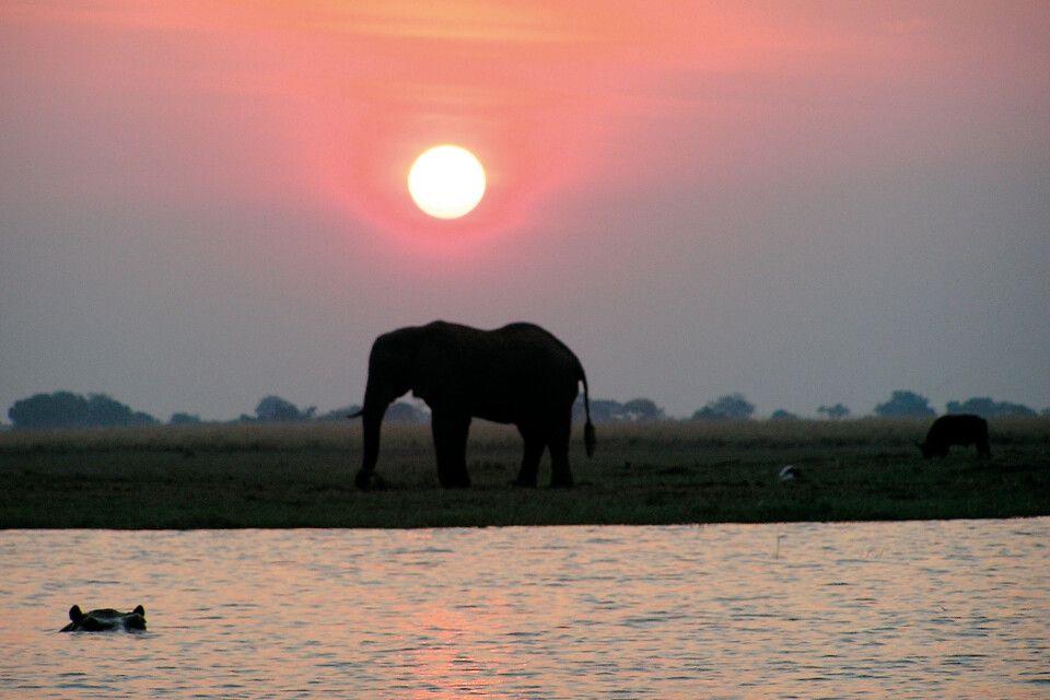 Elefant in der Dämmerung
