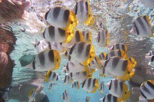 Unterwasserwelt auf Tahiti