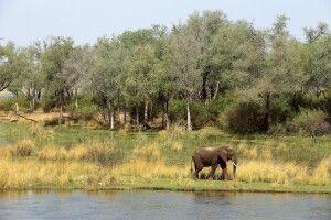 Sichtung eines Elefanten vom Zeltdeck