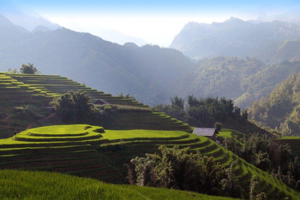 Zufall oder Absicht? – Reisfeld in Herzform