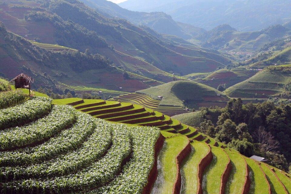 Mais- und Reisfelder