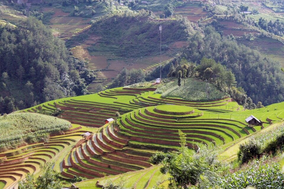 Mam Xoi – das Wahrzeichen von Mu Cang Chai