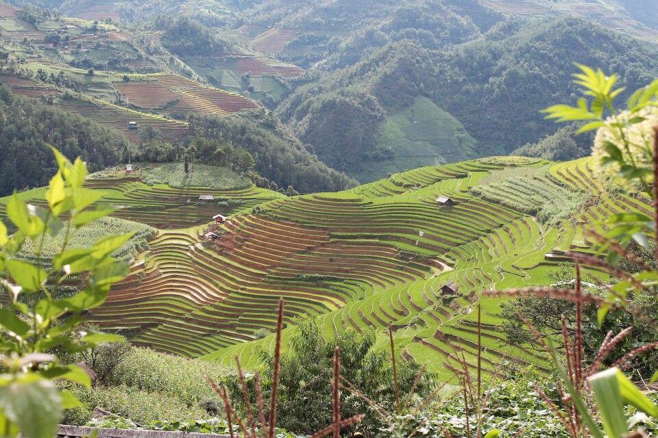 Kunstvoll angelegte Reisterrassen