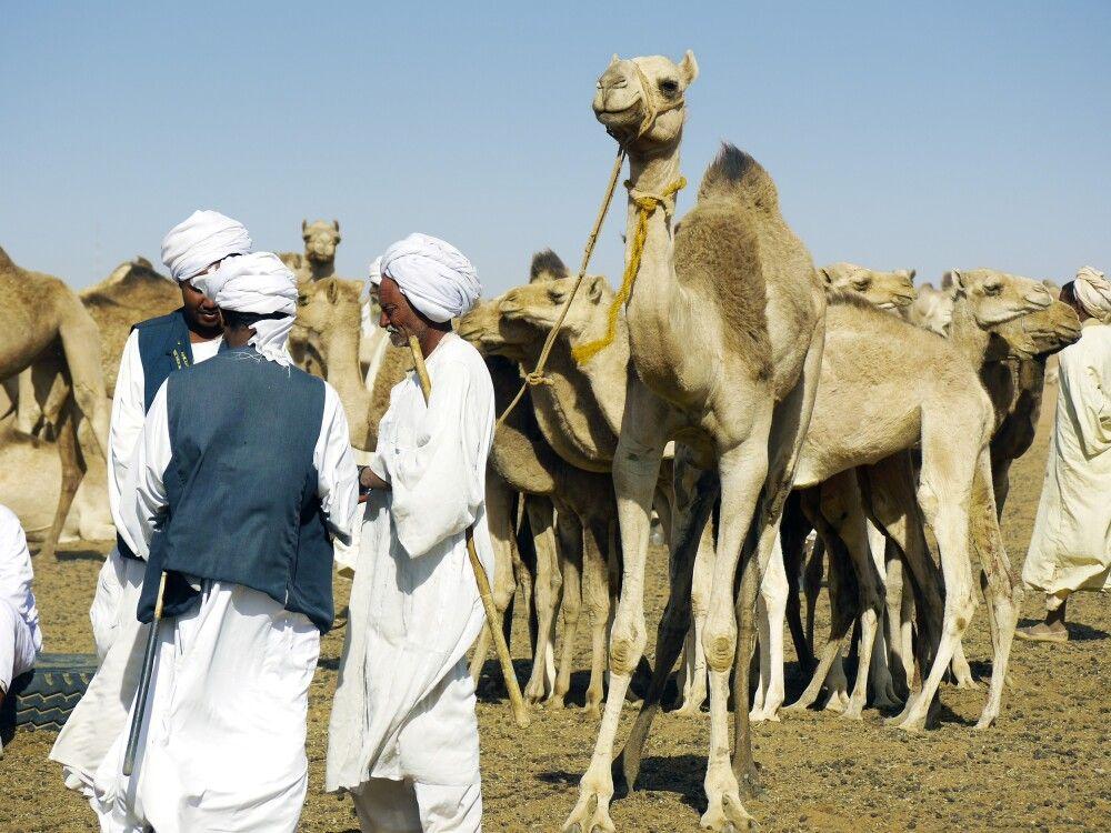 Kamelmarkt Omdurman
