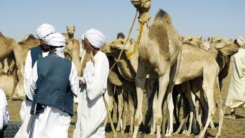 Kamelmarkt Omdurman © Diamir