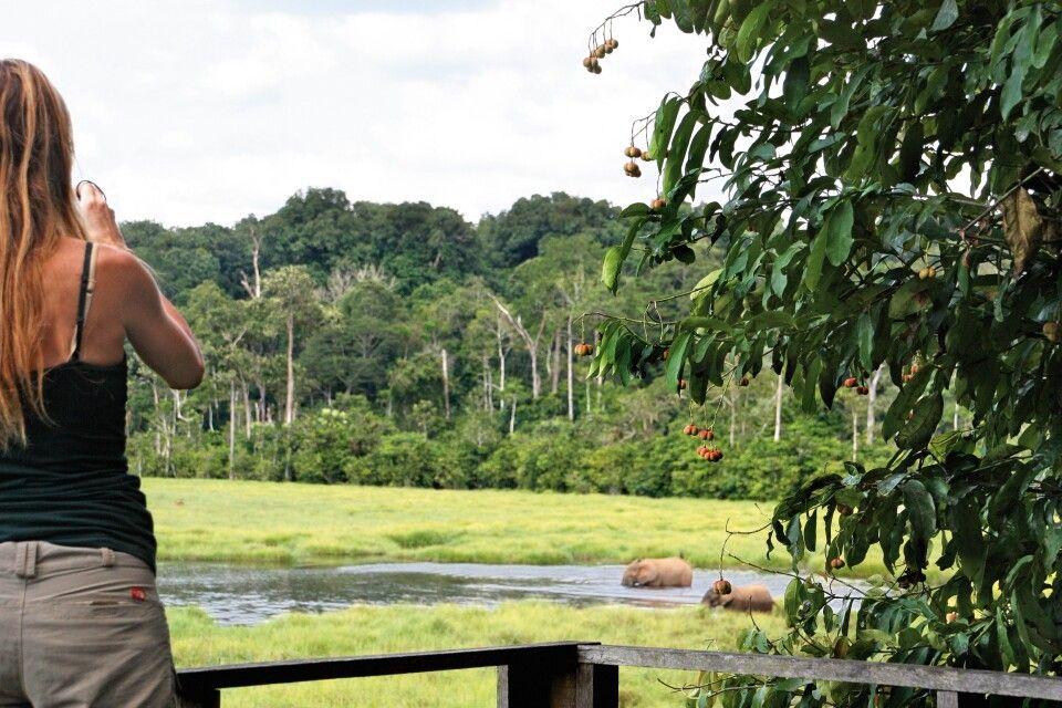 Nouabale-Ndoki-Nationalpark