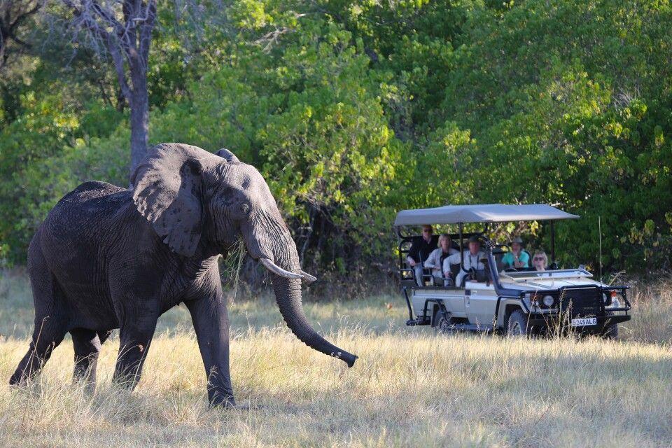 Elefanten Begegnung auf Pirschfahrt
