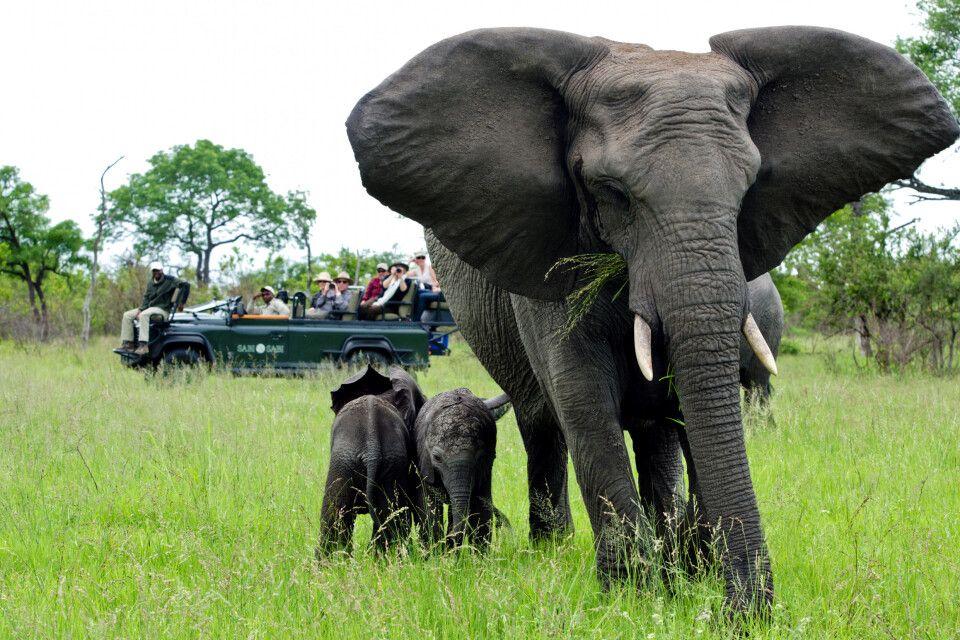Elefantenkuh mit zwei Kälbern