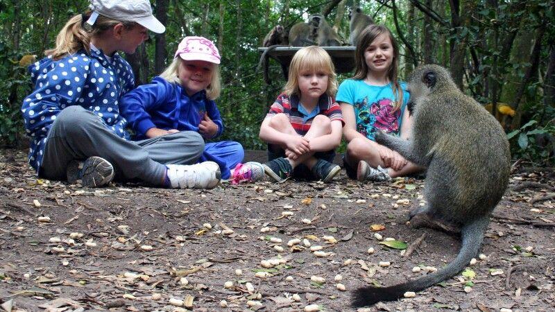 Ein toller Zeitvertreib bei den Affen im Monkeypark © Diamir