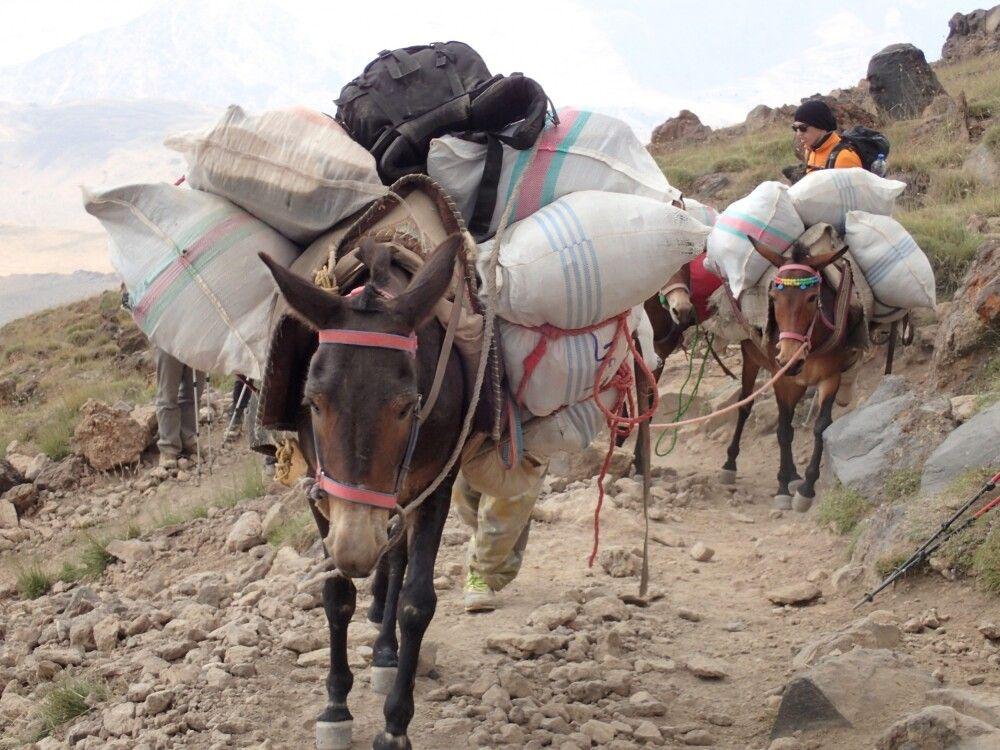 Dank der Lasttiere geht es mit nur leichtem Gepäck ins Hochlager des Damavand.