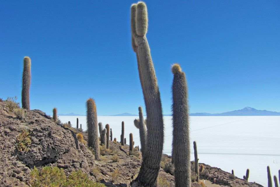 Kakteeninsel Incahuasi inmitten des Salar de Uyuni