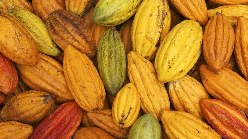 Kakao aus Brasilien © Diamir