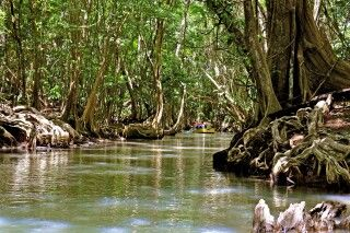 Dominicas Dschungellandschaft