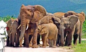 Elefant Addo-Elephant-Nationalpark