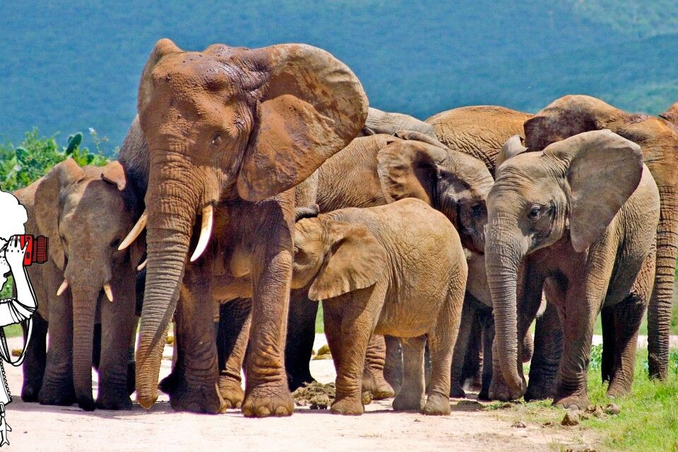 Elefanten im Addo-Elephant-Nationalpark