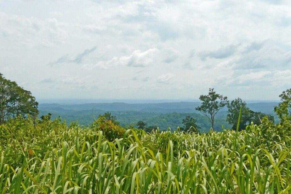 Endlose Weite in der Region Mondulkiri / Rattanakiri