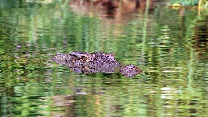 Krokodil im Chitwan-Nationalpark © Diamir