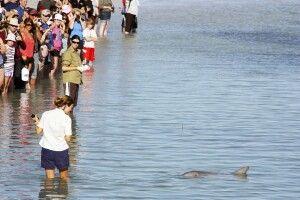 Delfine füttern in Monkey Mia