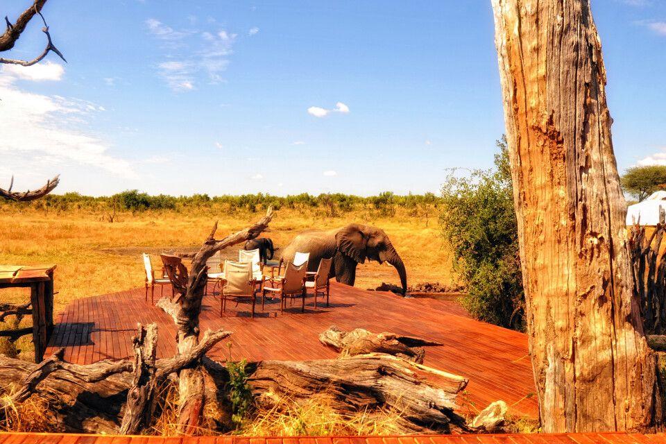 Elefant an der Terrasse mit Boma