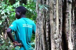 Moribane-Waldreservat am Fuß des Chimanimani-Berglandes