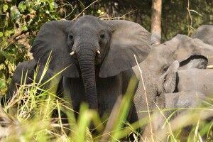 Elefanten im Gorongosa-Nationalpark