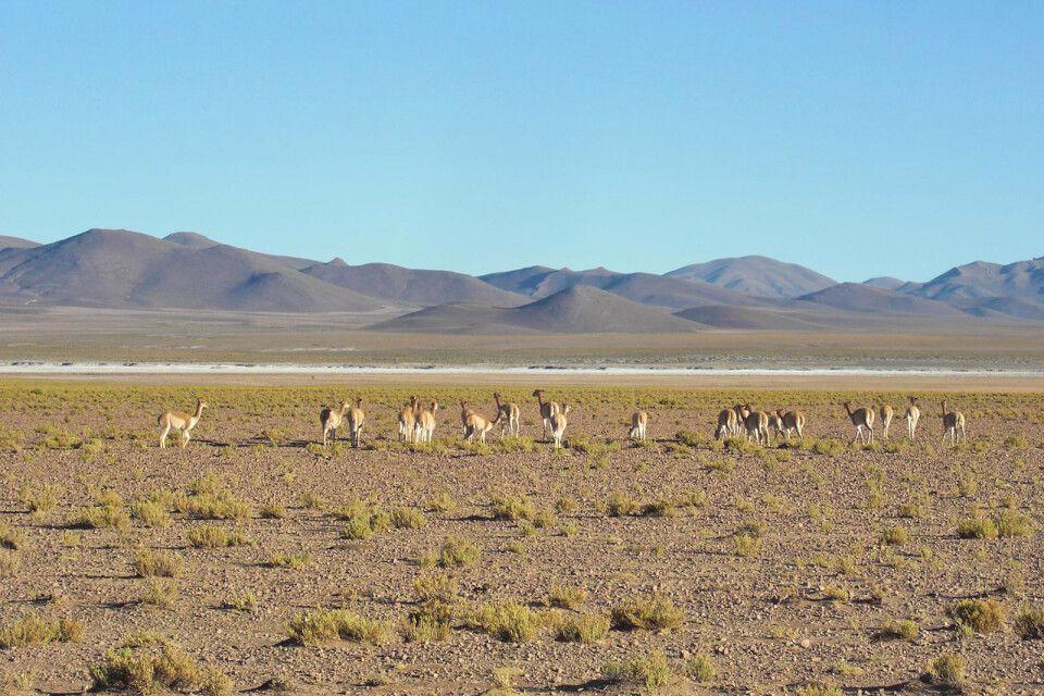 Hochland von Bolivien